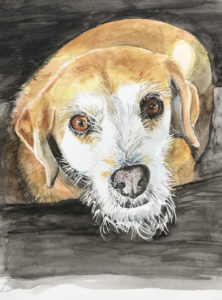 Pet Dog Watercolour