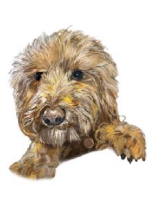 Portrait of Pet Dog