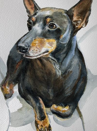 Dog Watercolour