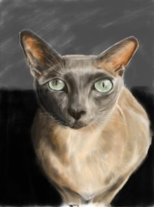 Kitty Pawtrait