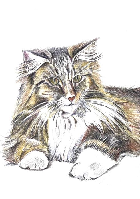 Katherines cat