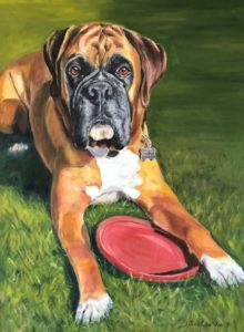 Boxer dog with frisby